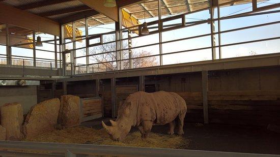nashornhaus bild von zoopark erfurt erfurt tripadvisor. Black Bedroom Furniture Sets. Home Design Ideas
