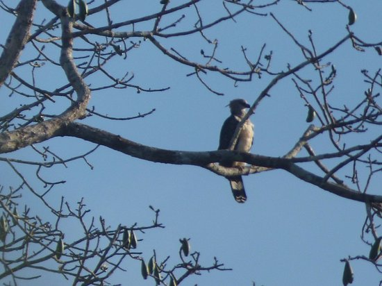 Positiv Turismo: Harpy eagle! - So excited I got to see one while at Sani Lodge