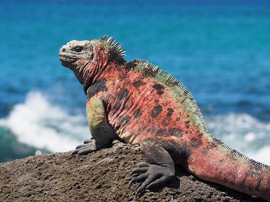 San Cristobal, เอกวาดอร์: Galakiwi Adventures