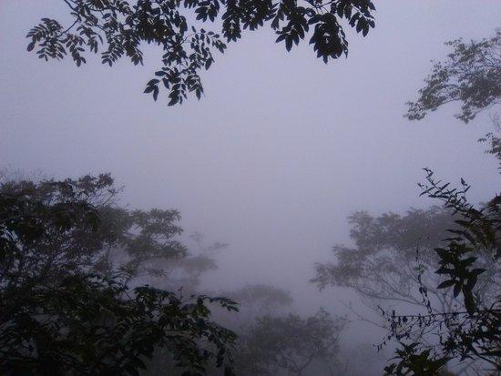 Moyobamba, Peru: zona de neblina