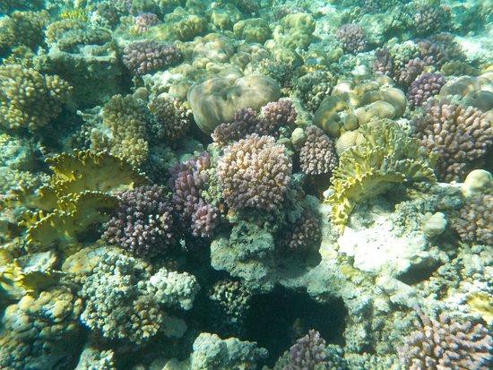 Marina Beach Resort Photo