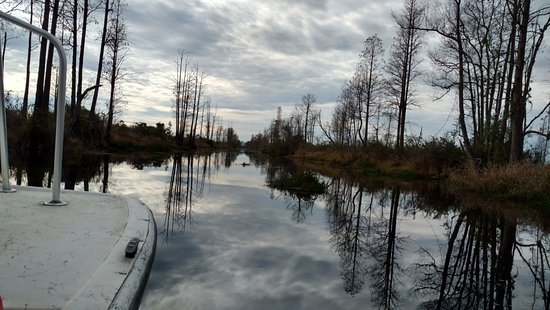 Folkston, GA: okefenokee refuge boat tour