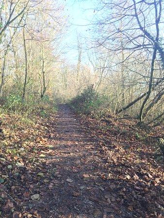 Ashbourne, UK: A walk through the trees at Carsington Water