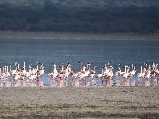 Lake Burunge Tented Camp: Vue du lac