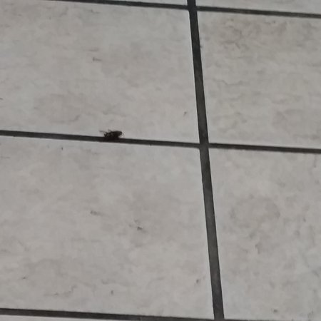Americas Best Value Inn Florence: Lady cucaracha greeting anybody who arrives late at the hotel