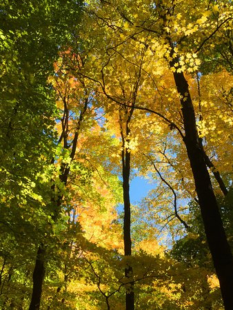 High Cliff State Park: beautiful fall canopy