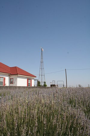 Plains, TX : Wind Charger
