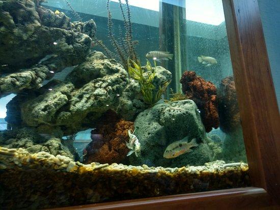 Interesting Aquarium Picture Of Mandarin Restaurant