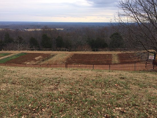 Charlottesville, فيرجينيا: photo7.jpg