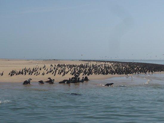 Mola Mola Safaris: Seal colony