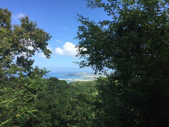 Wiltshire, Jamaica: Rocklands Bird Sanctuary