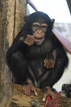 Monkey World: Thelma