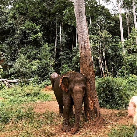 how to get to elephant valley project