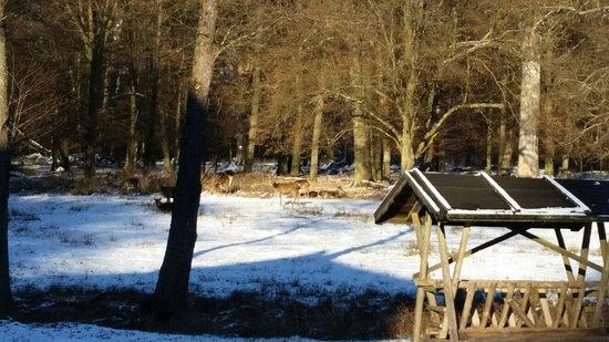 Bärensee : IMG-20170106-WA0019_large.jpg