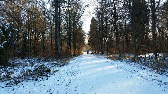 Bärensee : IMG-20170106-WA0031_large.jpg