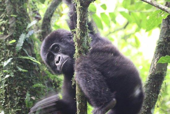 Mj Safaris Uganda