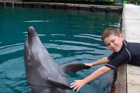 Dolphins Pacific: 2016 beautiful place