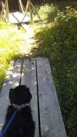 Missoula, MT: My dog near a picnic spot right by Garnet