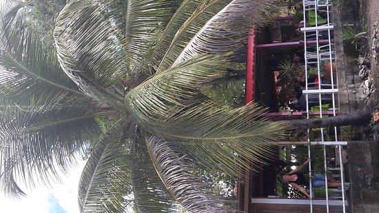 Vieux-Habitants, กวาเดอลูป: Super resto avec vue sur mer