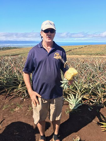 Makawao, Hawái: Mike cutting a pineapple in the fields for us to taste
