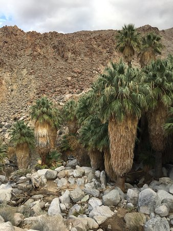 Fortynine Palms Oasis Trail: photo0.jpg