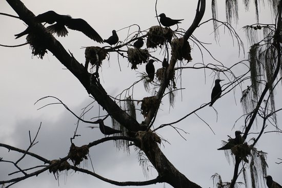 Lady Elliot Island, Australia: Thousands of birds on the island
