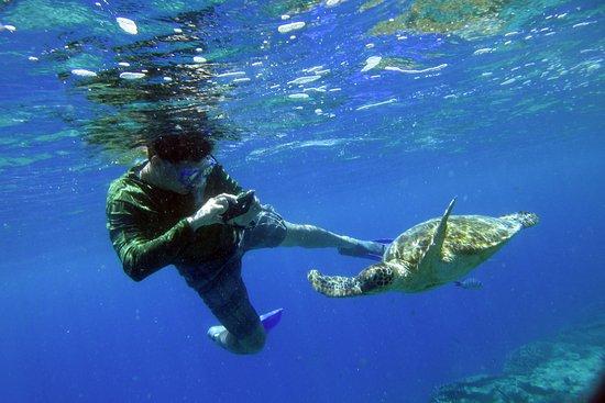 Lady Elliot Island, Australia: Swimming with turtles