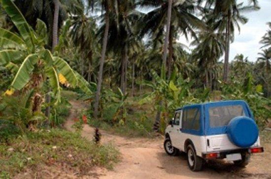 Dominica Shore Excursion: Half Day...