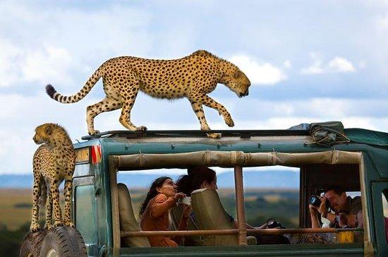 Masai Mara Camping Safari