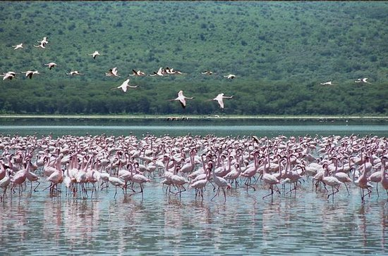 Lake Nakuru National Park Day Tour...