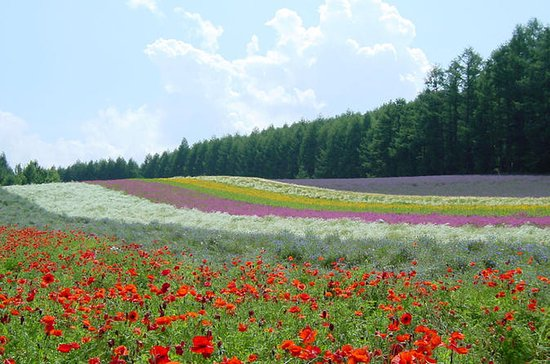 Furano and Biei One-Day Tour by