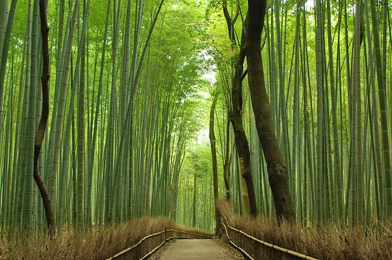 Privat Kyoto Arashiyama Tilpasset...