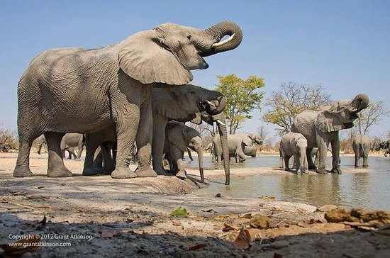 Safari di 2 giorni all'Amboseli