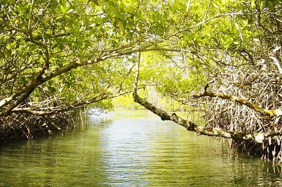Cancun Mangrove Lagoon Guided Tour