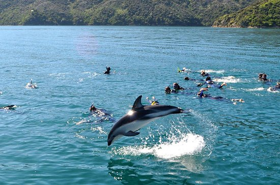 Half-Day Dolphin Eco-Tour from Picton
