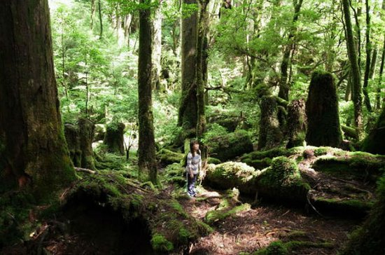 Walking Tour on Yakushima Island