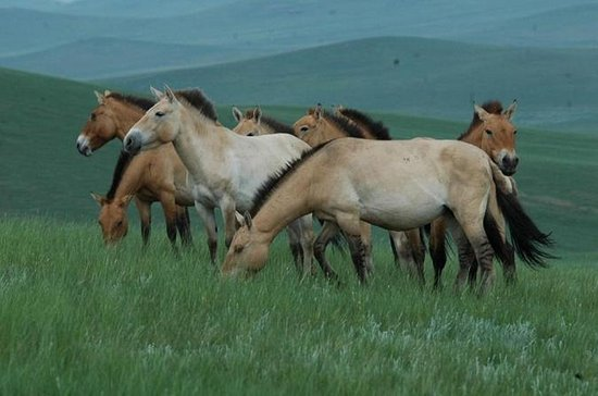 Day Tour of Hustai National Park