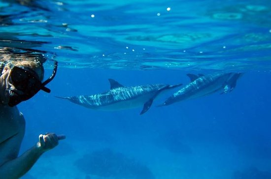 Dolphin Snorkel Tour