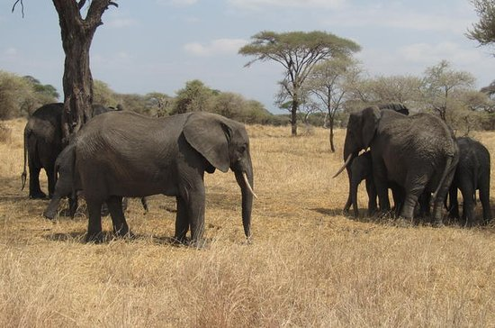 Tarangire National Park: guidad ...