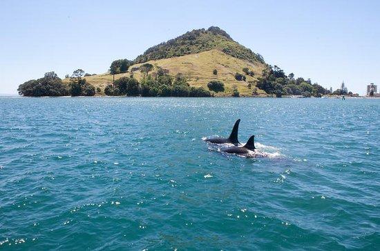 1-Hour Tauranga Harbour Scenic Cruise from Mount Maunganui