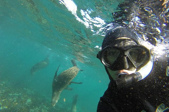Seal Snorkeling Experience in Cape...