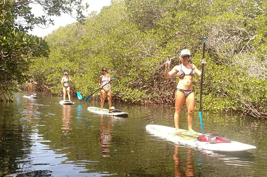 2 Hour Kayak or Paddleboard Eco Tour