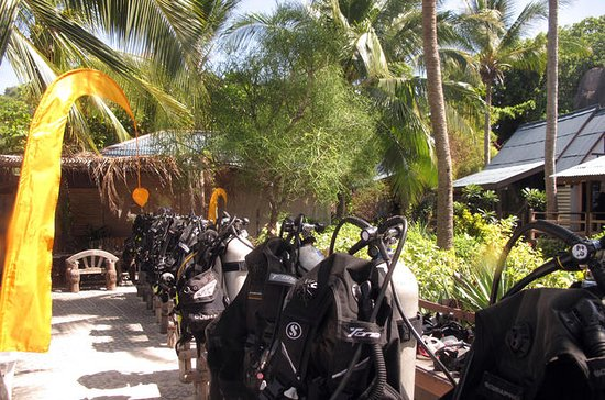 Discover Scuba Diving from Koh Samui