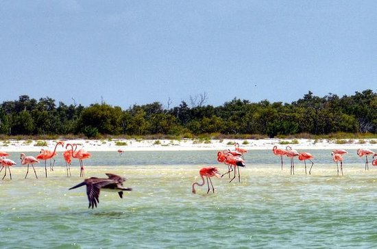 Holbox Island, Pasion Island Full-Day...
