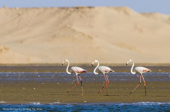 Souss Massa National Park Dagtrip ...