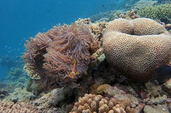 Excursión de snorkeling a la bahía de...