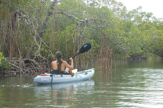 Excursión ecológica en kayak en Fort...