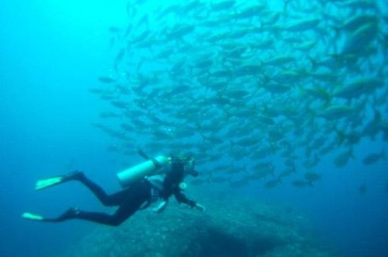 Two-Tank Dive at Caño Island