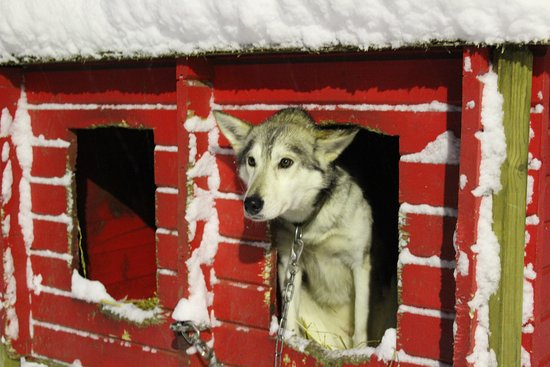 Troms, Norway: The dogs are so friendly!