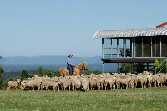 Tobruk Sheep Station: Farm and...